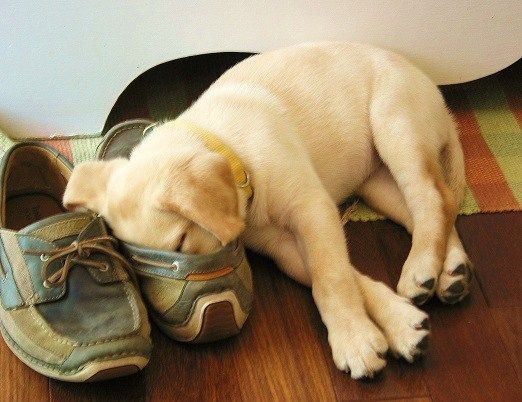 Asleep in a shoe...