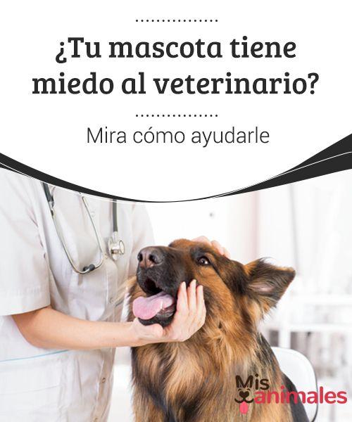 ¿Tu #mascota tiene miedo al veterinario? Mira cómo ayudarle  Son muchos los casos de miedo al veterinario, una #fobia canina más frecuente de lo que sería deseable. A la hora de ir a su doctor, los #perros ladran, gruñen, se esconden e incluso #pueden hacer sus #necesidades en la consulta por puro pánico.
