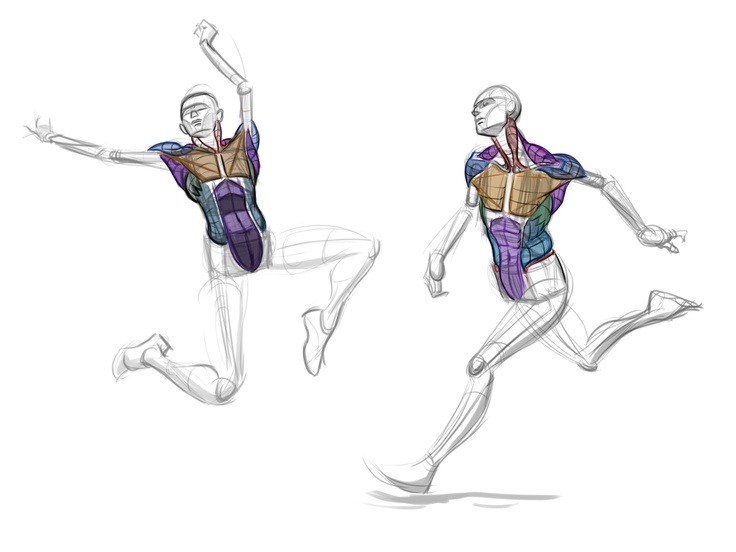 Human Character Design Tutorial : Best anatomy images on pinterest human body