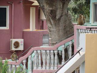 Miriam Mylene's reisblog: Reisverslag Gambia 2015: dag 6