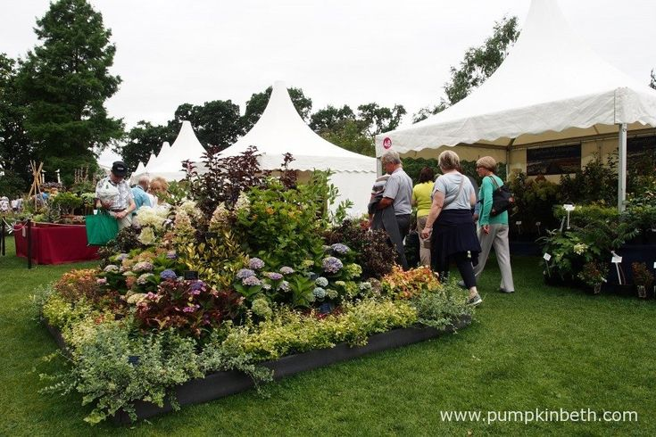 This is the Signature Hydrangeas stand from Golden Hill Nurseries, at the RHS…