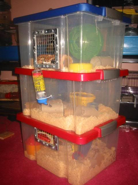 D.I.Y Hamster Cages and Toys - Mythic Hams-The person who built this has a good idea, but there is not enough air circlation  ..Wood shavings have alot of dust.Use something else.Good idea, but needs abit of work.cp