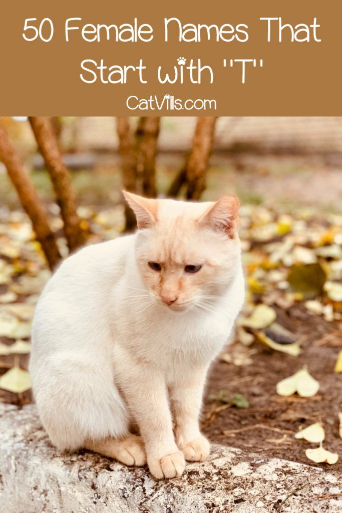 100 Terrific Cat Names That Start With T Girl Cat Names Kitten Names Boy Kitten Names Girl