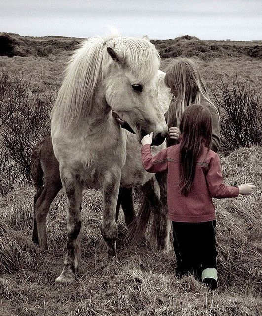 Ponies are said to be a little girl's best friend. Personally, I loved my warmbloods.