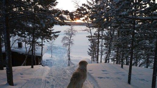 Outoa valoilmiötä ihailemassa. Tammikuu 2016 Enontekiö kotitörmä.