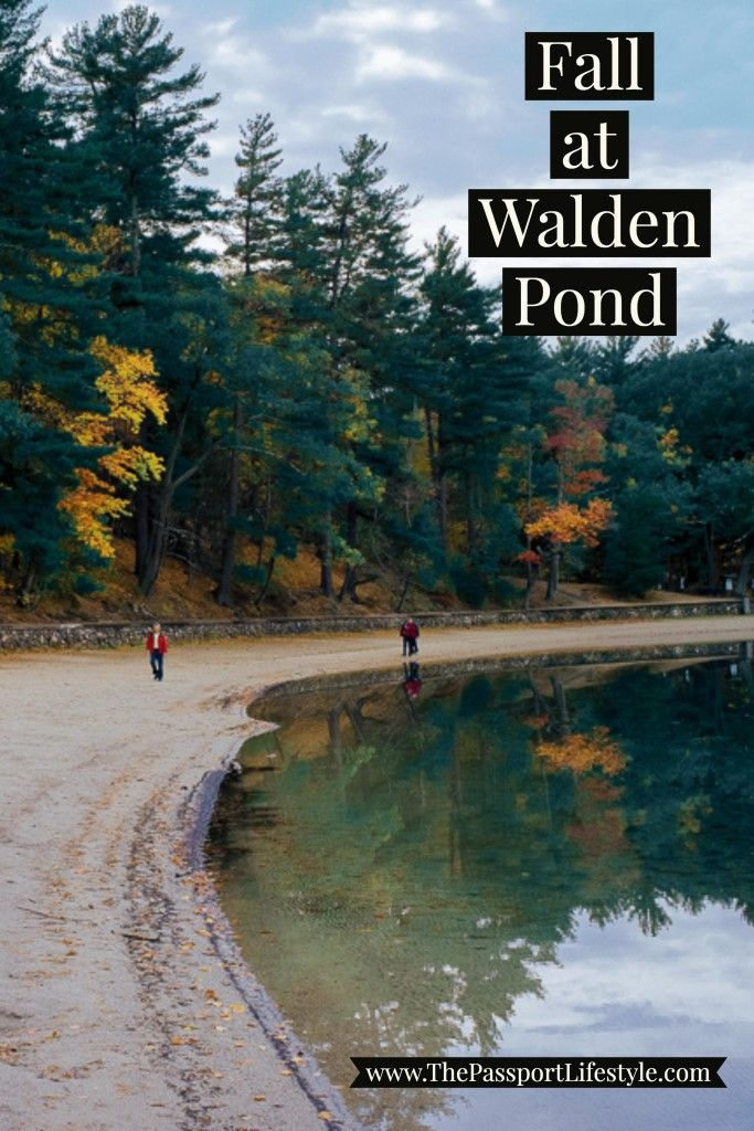 Fall in Massachusetts is BEAUTIFUL. Here's why Fall at Walden Pond should be on your East Coast Bucket List!! | thepassportlifestyle.com