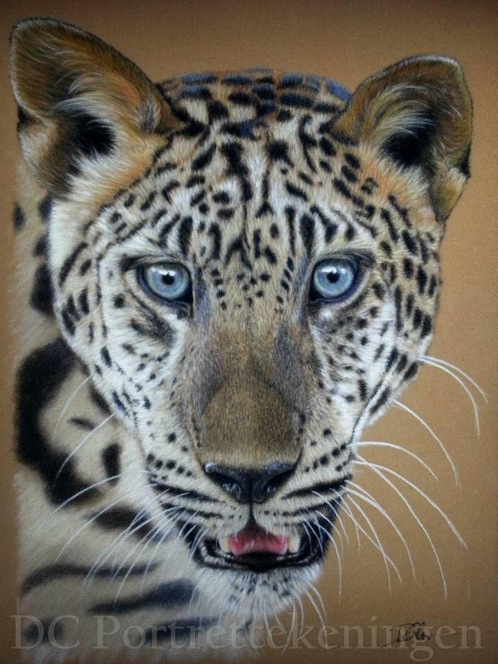 Leopard by DCportrettekeningen #realistic #portrettekening #portraitdrawing  #coloreddrawing #portraitart #drawing #pasteldrawing  #art #realism #hyperrealism #hyperrealistic #realisticdrawing #pencildrawing  #coloredpencil #leoparddrawing #leopard #panthera #wildlifeart #wildlife
