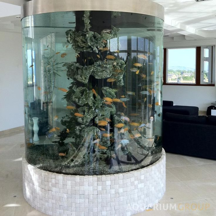 25 best ideas about round fish tank on pinterest for Large fish tank