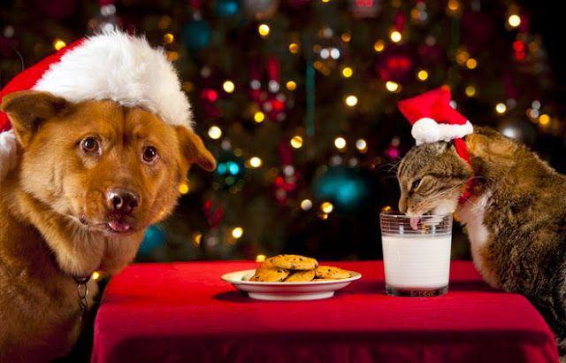 Come hanno festeggiato il cagnolino e la gattina, una favola ceca.