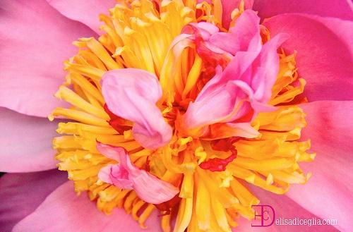 dentro ad un fiore