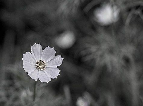 Floret by Olga Olay  #OlgaOlayFineArtPhotography #ArtForHome #FineArtPrints #Flower
