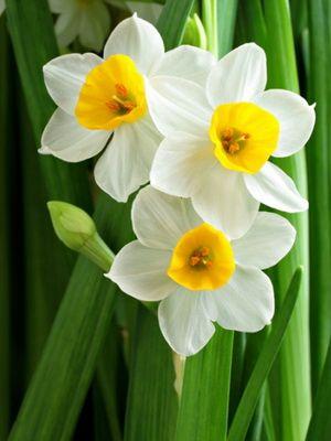 Луковичные цветы и растения для сада: фото, названия, посадке весной