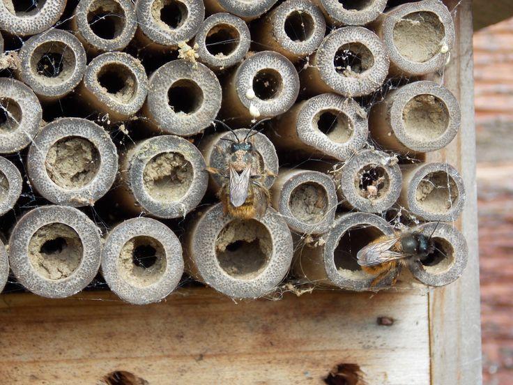 Wall bee, image used for linoprint