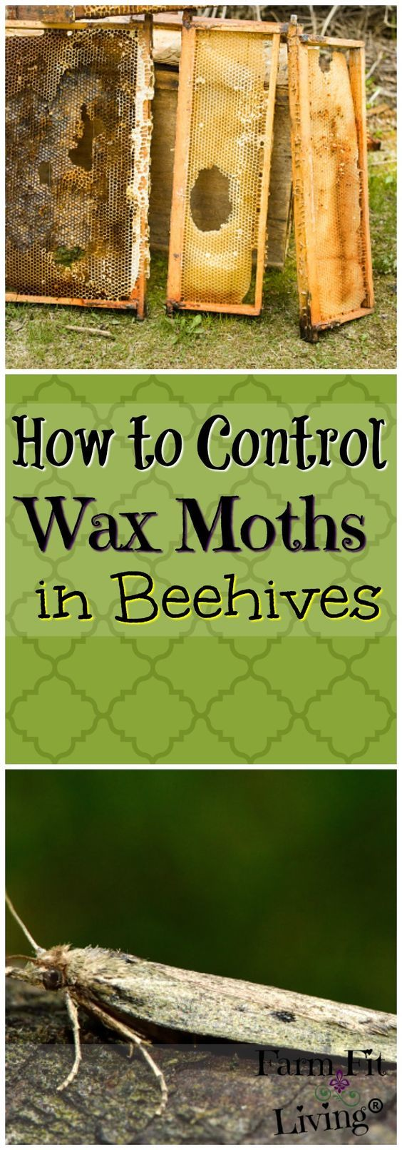 Looking for ways to control wax moths in beehives? Here, you'll find tips for prevention, control and identification.  via @www.pinterest.com/farmfitliving