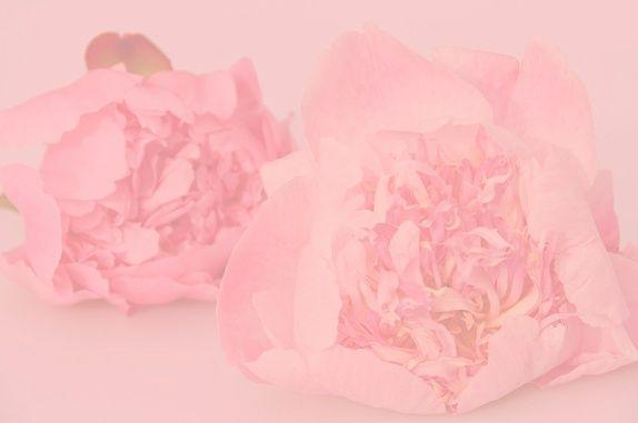 Rosa peoner (Foto A4) av Gry Thunes