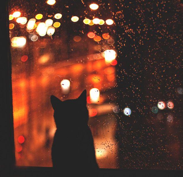 Kot w oknie - Zdjęcie na płótnie w Fotografia Monika Małek na DaWanda.com