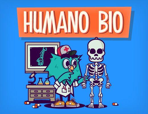 Humano Bio, un jeu interactif en ligne pour apprendre l'anatomie en s'amusant et découvrir où se placent les principaux os et organes du corps humain.