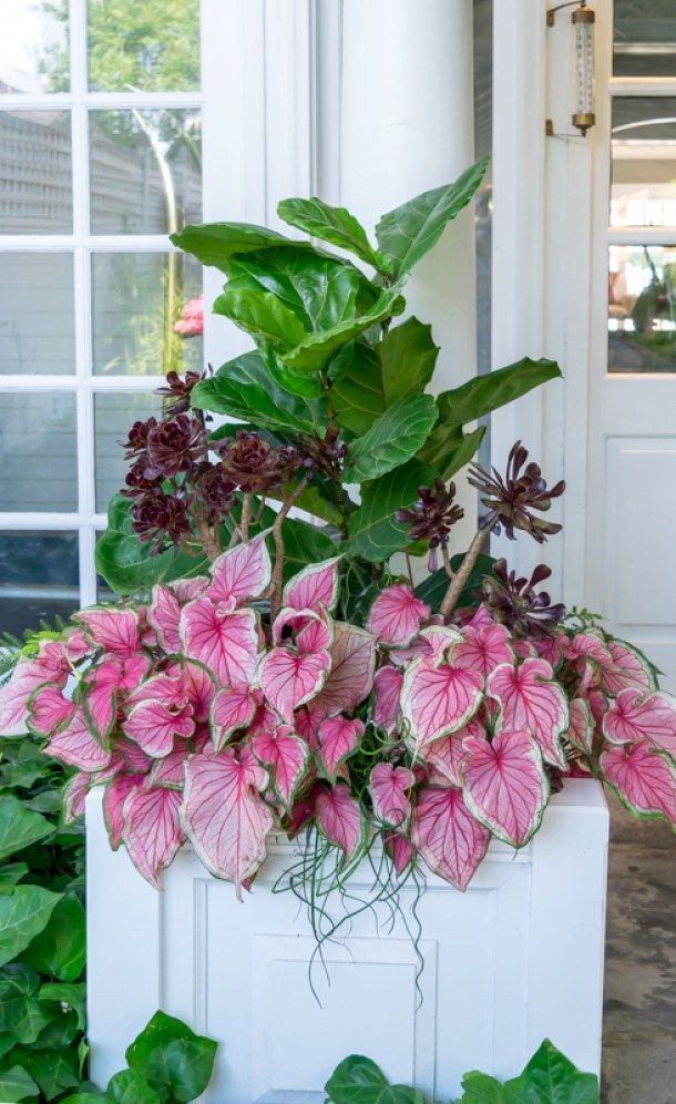 Recipes' to help you create stunning container gardens. Beautiful images and detailed 'recipes' including specific plants for several container gardens. - container-flower-gardening-ideas