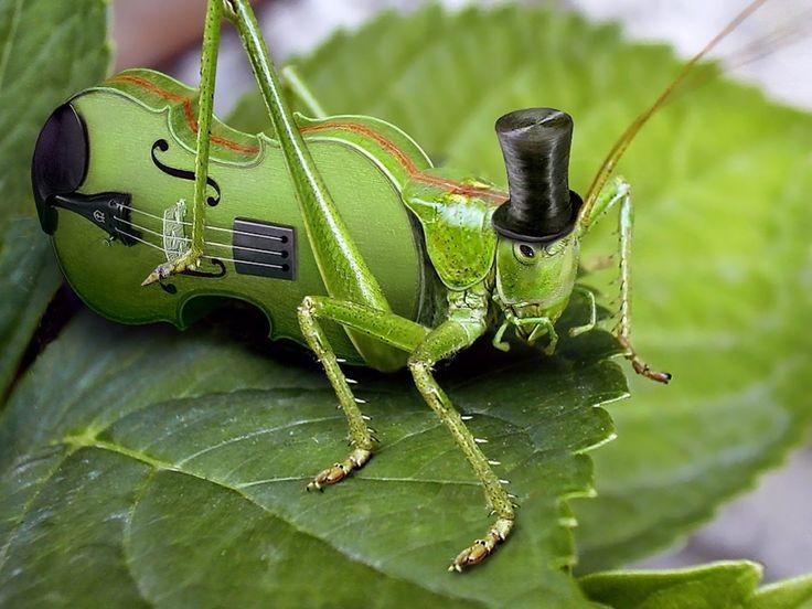 Image result for cricket bug