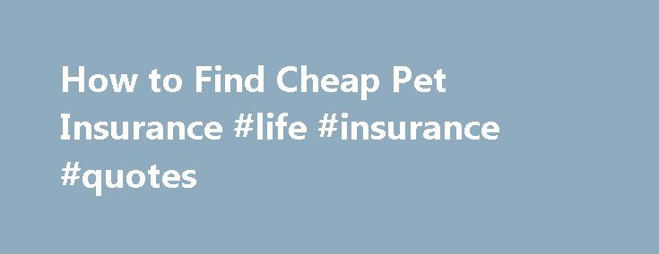 How to Find Cheap Pet Insurance #life #insurance #quotes http://nef2.com/how-to-find-cheap-pet-insurance-life-insurance-quotes/  #cheap pet insurance # How to Find Cheap Pet Insurance Shares & Saves Finding cheap pet insurance does not have to be a daunting task. There are a plethora of accredited insurance plans for you and your furry friend. Pet insurance is a great thing to have for yet pet, as veterinary costs begin to...