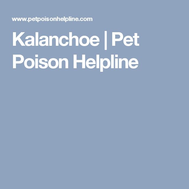 Kalanchoe | Pet Poison Helpline
