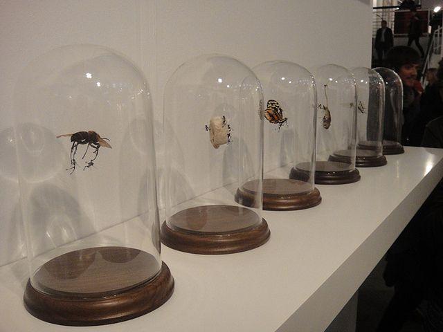 Tessa Farmer  London Art Fair 2011