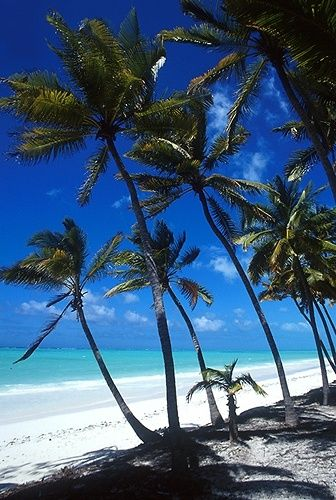 paradise beach in Zanzibar