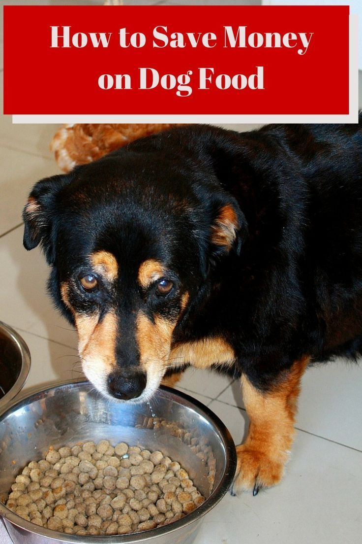 Wondering how to save money on dog food? We've got you covered! Check out our tips that go beyond just finding decent dog food coupons & start saving today!