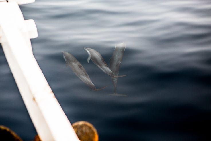 Dolphin Spotting. . .