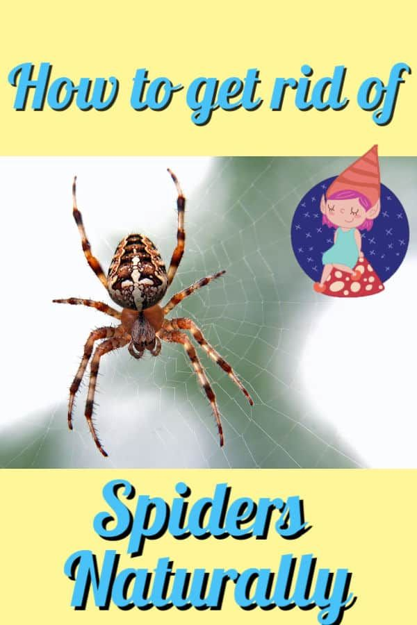 How To Get Rid Of Spiders Naturally With Images Get Rid Of