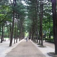 남이섬 (Nami Island) - Chuncheon, Gangwon-do