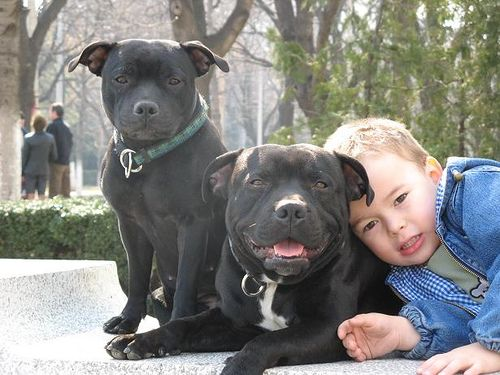 The Best Family Dogs – 10 Breeds For Homes With Children      I often receive questions about breeds that will do well living in homes with children. These questions are difficult to answer because there is not one single breed where I can say each and every dog will be child friendly. However there are many breeds that generally *are* great with children! Here is a list of 10 breeds of all shapes and sizes that do well in growing families.