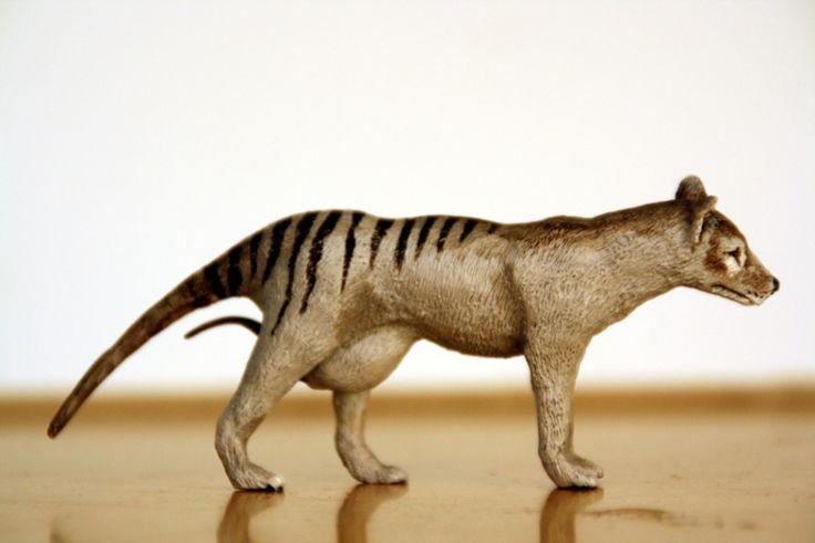 186 best images about Tasmanian Tiger on Pinterest ...