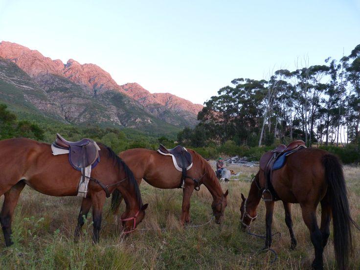 Picnic Horse Trails #capewinelands #wolseleyza #tulbagh