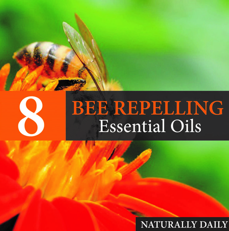 8 essential oils to keep bees away natural bee