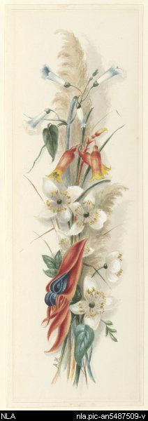 Meredith, Louisa Anne, 1812-1895.  Native wildflowers including Sturt's desert pea, Christmas bell [picture]  [ca. 1840] 1 drawing : watercolour and pencil ; 34.8 x 11.3 cm. (s.m.)  From National Library of Australia collection  http://nla.gov.au/nla.pic-an5487509  nla.pic-an5487509