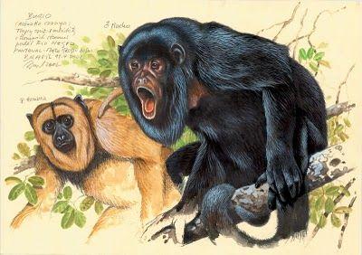 Pintura de Jan Dungel - Alouatta caraya hembra y macho