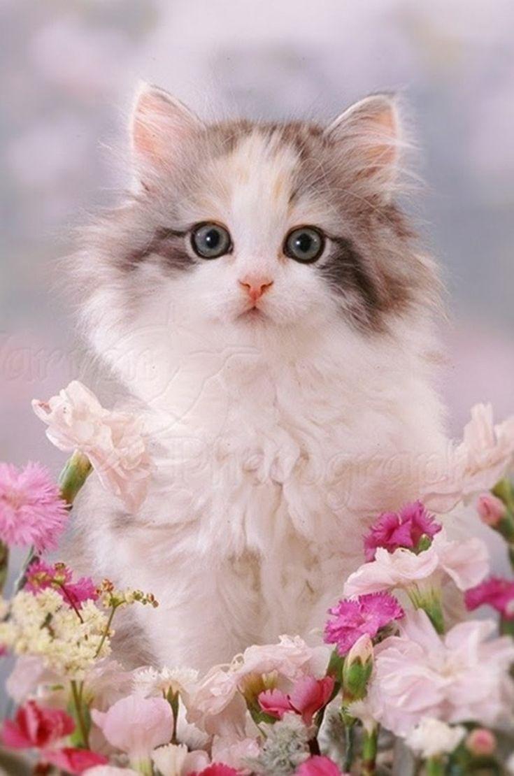 Открытки милые котята