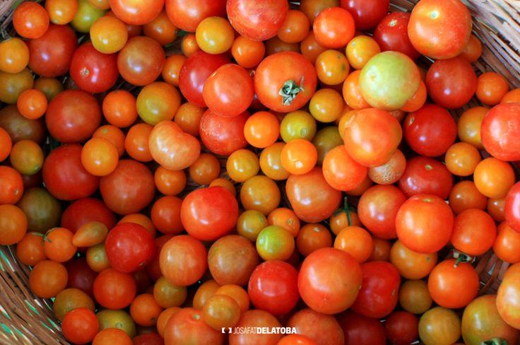 Organic tomatoes in the organic market  #josafatdelatoba #cabophotographer #mexico #bajacaliforniasur #loscabos #sanjosedelcabo #mercadoorganico #sanjomo