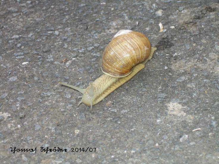 Auf dem Ruhrtalradweg  Juli 2014