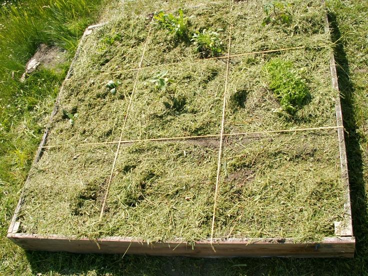 Säen und/oder Bepflanzen  abschließend mulchen