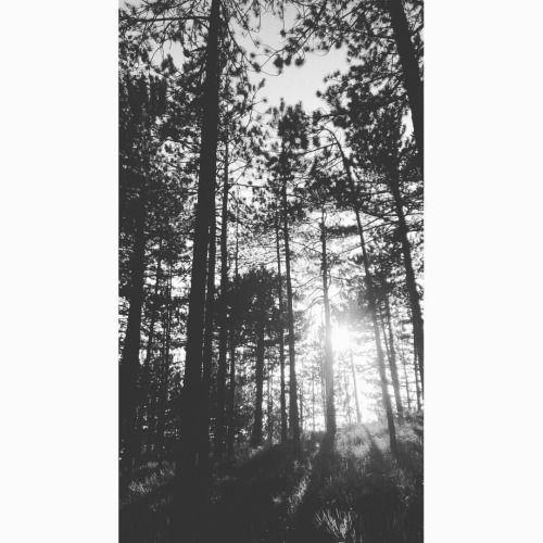 🌲🌄 #pini #sunset #pineta #gavi #appennino #pines #wood ©Annalisa Turolla