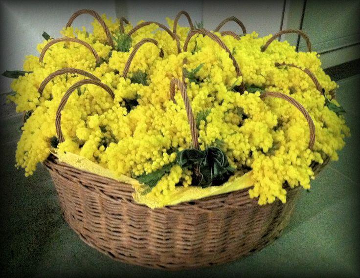 un cesto pieno di...mimose!