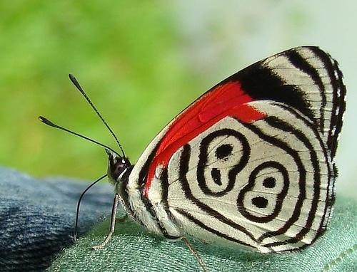 Borboleta 88 - Butterfly 88 | Flickr - Photo Sharing!