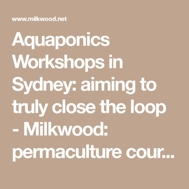 Aquaponics Workshops in Sydney: aiming to truly close the loop - Milkwood: permaculture courses, skills + stories