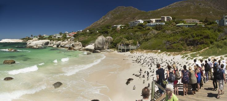 Famous for its colony of African #penguins, Boulders Beach has white sandy coves & clear, calm seas. #Africa #CapeTown #SouthAfrica #travel #summer