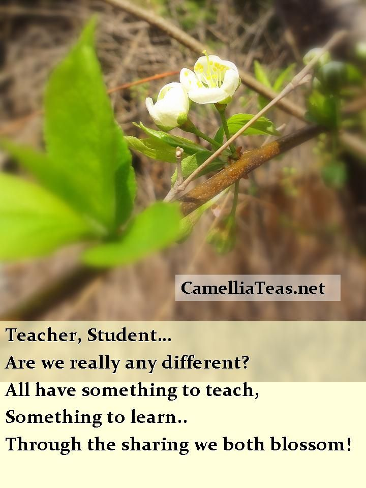 Teachers - students, a rapport of mutual respect, appreciation and gratitude! For all that we are to each other - such beauty and blossoming of our mutual potential explodes!