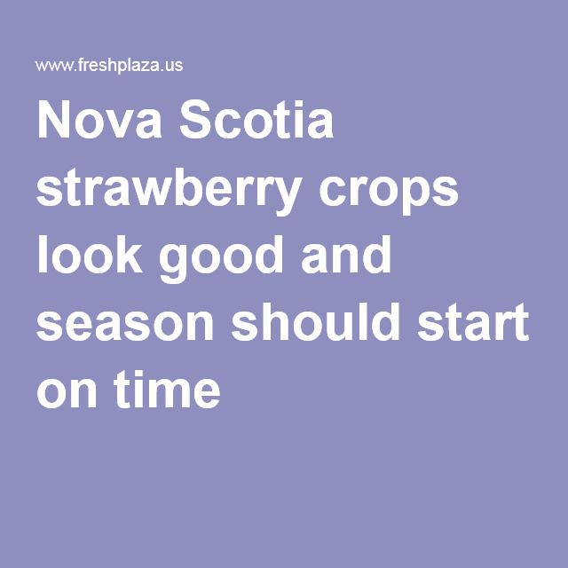 Nova Scotia strawberry crops look good and season should start on time