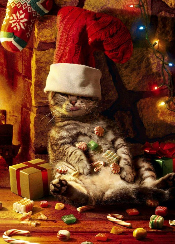 """Too much catnip for me....  """"Merry Christmas!"""""""