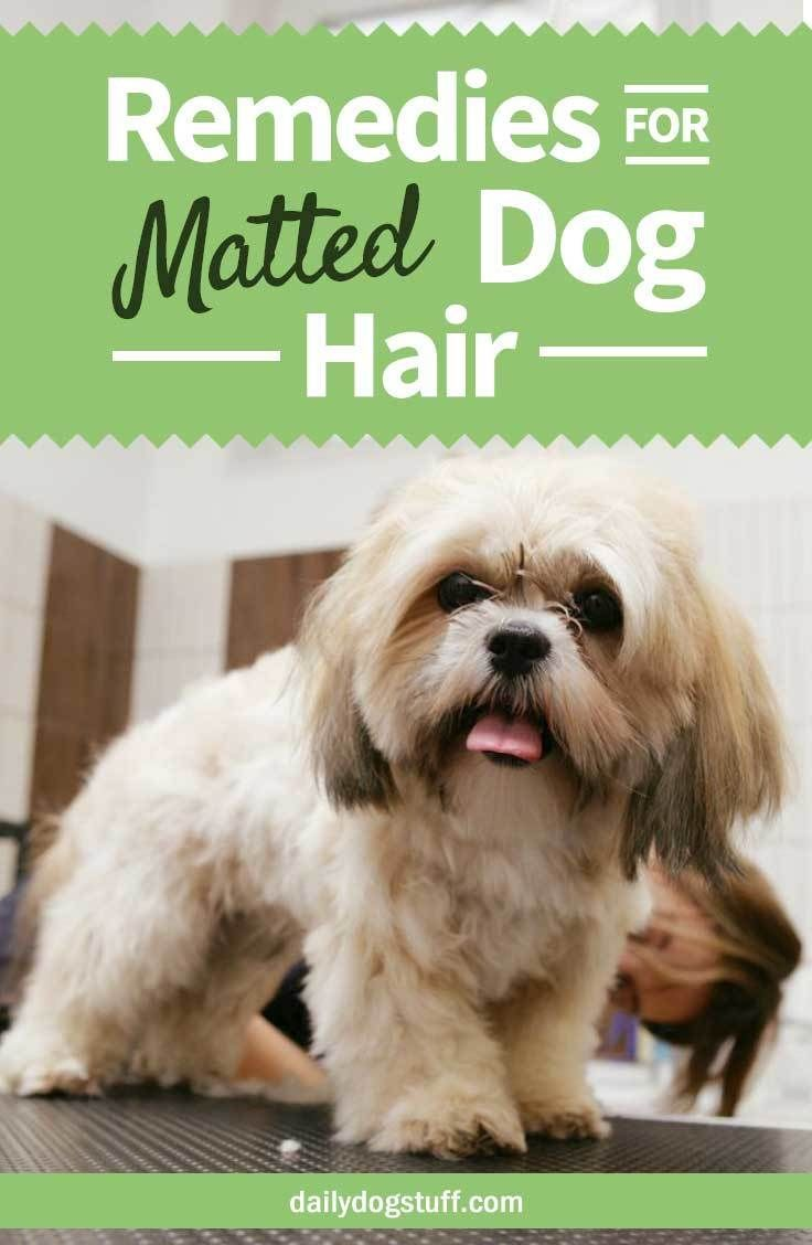Home Remedies For Matted Dog Hair Tips To Untangle Or Shave Via Dailydogstuff Matted Dog Hair Dog Hair Dog Hair Cleaning
